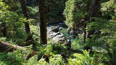 East Fork Quinault River