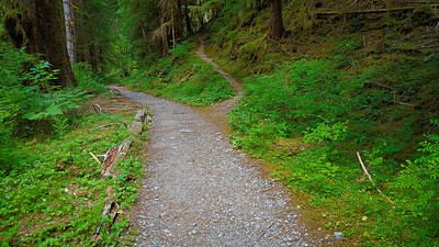 Junction with the Graves creek trail - near the beginning of the  East Fork Quinalt river trail