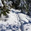 Our broken trail thru the snow