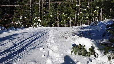 Fanton Trail Snowshoe