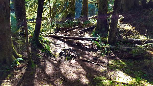 Campsite near the South Fork on Hillockburn Trail