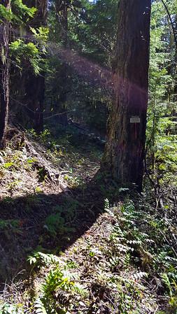 Milepost Three Trail