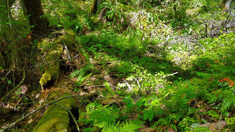Creek crossing on lower MP3 trail