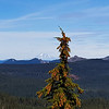 Mt Adams? from the overlook on Rimrock trail