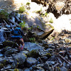 Crossing Thornton Creek tributary on Thornton Creek trail