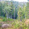 Meadow area on Thornton Creek trail