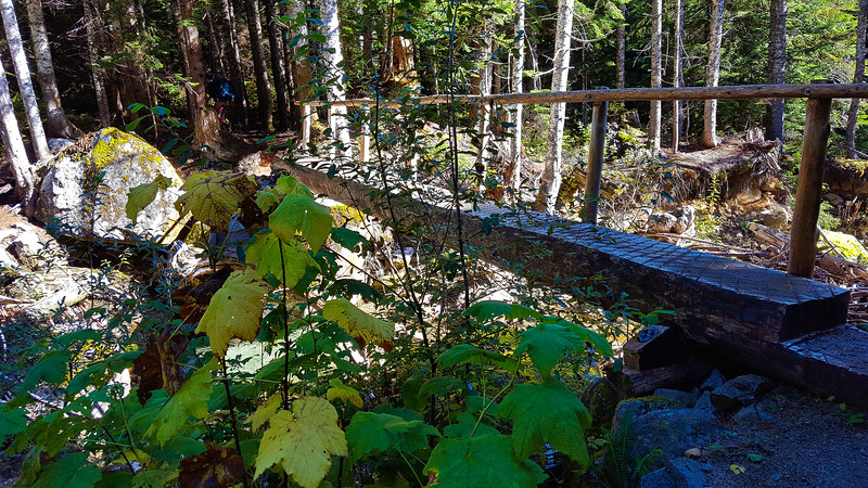 Bridge over Thorton Creek on Thornton Creek Trail
