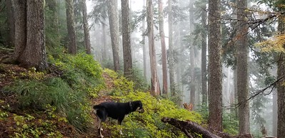 Thor on section of Baty Butte Trail (in the clouds)