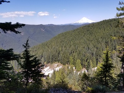 Mt Hood from a viewpoint on the Old Baldy trail