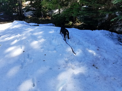 Thor playing in the snow arouind the un-named lake below Old Baldy