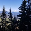 Mt Hood from Bull of the Woods trail