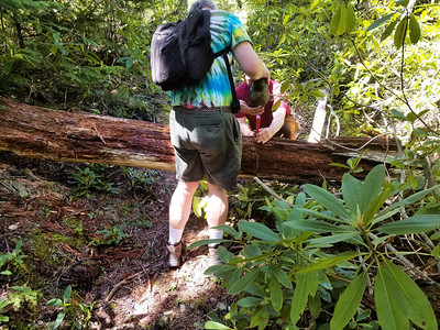 Charles decided to cut out this rather large, partially rotten log off the trail - Before