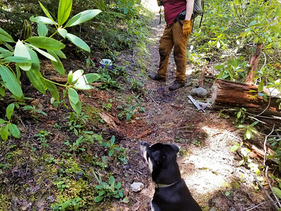Charles decided to cut out this rather large, partially rotten log off the trail - After