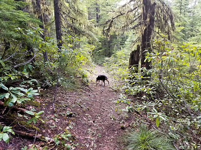 Thor on the Burnt Granite trail