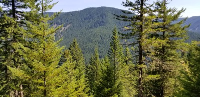 Indian Ridge from Corral Springs trail