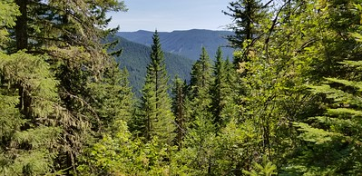 Looking thru the trees across to the South Fork Roaring River drainage -where the 511 trail goes