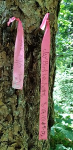 These were ribbons at the campsite at the bottom of Corral Springs Trail - not too many people make it all the way down to Roaring River