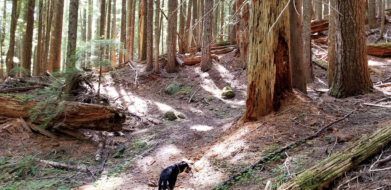 Neat section on Corral Springs where old growth has died and newer trees are taking over