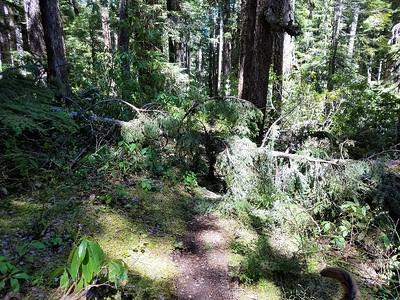 Trail Maintenance - Before - Dickey Creek Trail