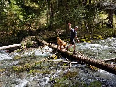 Kirk and Ollie braving crossing the log across the creek - Dickey Creek trail