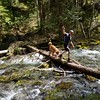 Kirk and Ollie braving crossing the log across the creek - Dickey Creek trail