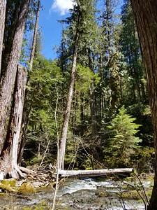 Beautiful blue sky - Dickey Creek crossing - Dickey Creek trail