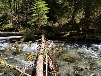 "A new ""bridge"" across Dickey Creek - Dickey Creek trail"