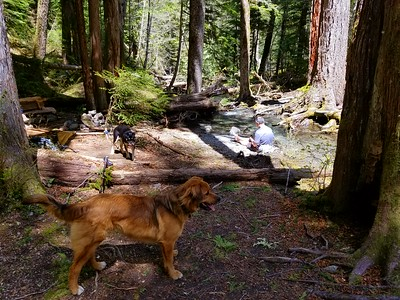 Campsite at Dickey Creek crossing - Dickey Creek Trail