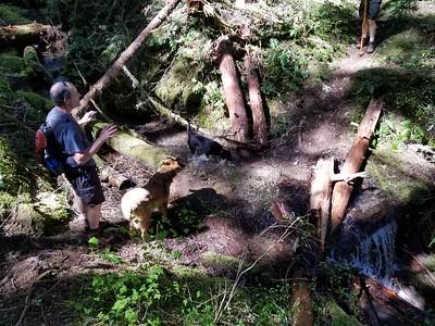 Un-named side creek -Dickey Creek trail