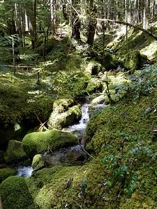 Un-named creek along Dickey Creek trail
