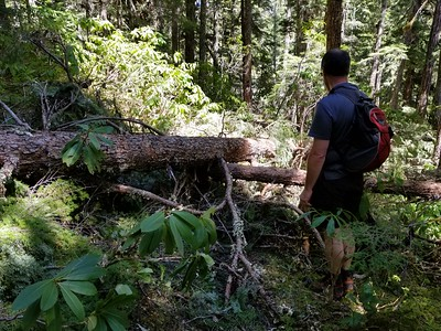 Trail Maintenence - Before - Dickey Creek trail