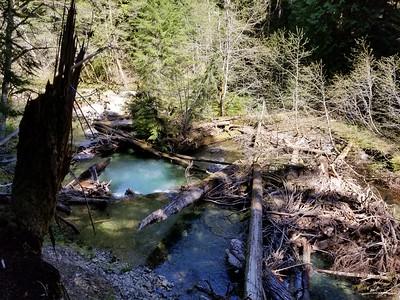 Dickey Creek - Dickey Creek trail