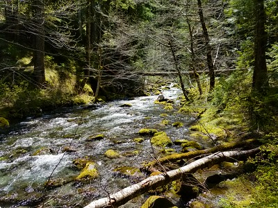 Robert pondering the creek - Dickey Creek trail