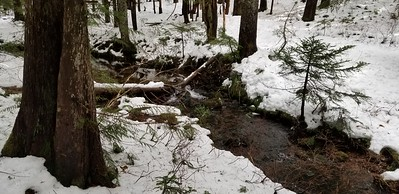 Fanton creek next to the Fanton Trail