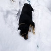 Thor playing in the deep snow below Squaw Mountain