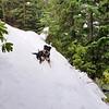 Thor having fun in the deep snow