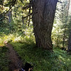 Interesting double tree on Fish Creek Mountain trail