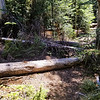 Downed logs at High Lake junction on Fish Creek Mountain trail