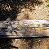 Someone carved this into a downed log at High Lake junction on Fish Creek Mountain trail