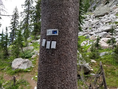 """These were """"pheromone packets"""" on a pine tree- the sign said they were trying to protect pine trees from some kind of beetle infection"""