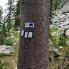 "These were ""pheromone packets"" on a pine tree- the sign said they were trying to protect pine trees from some kind of beetle infection"
