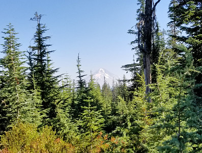 A great view of Mount Hood from one of the clearcuts