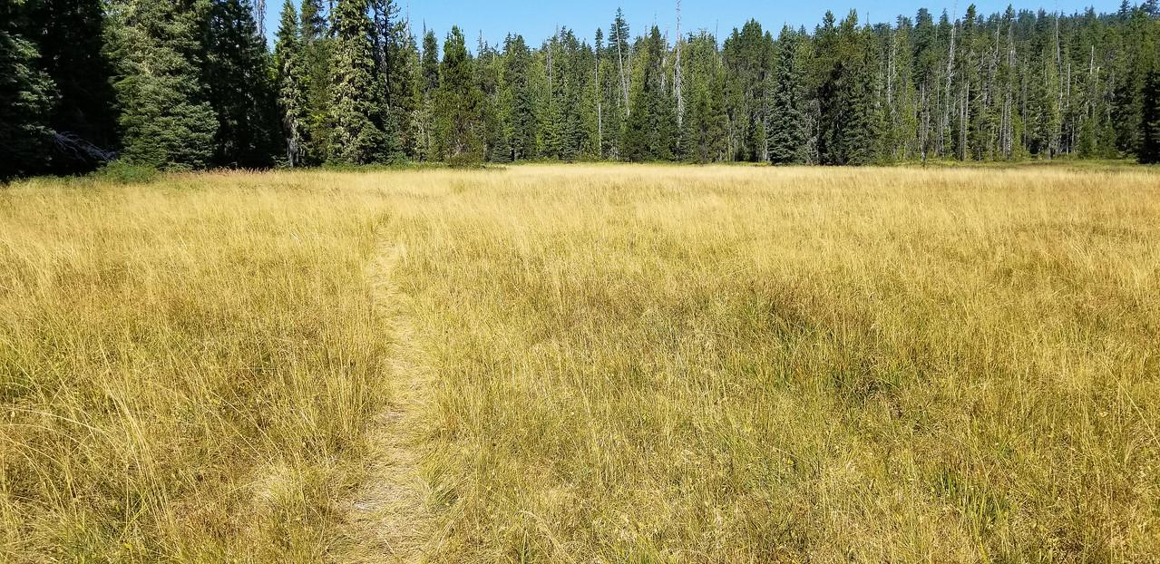 Anvil Lake trail thru Blackwolf Meadow