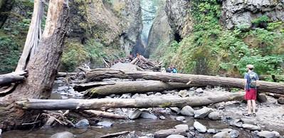 The big logjam on Oneota Creek - we need to pass this logjam before entering the canyon