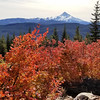 Mt Jefferson with the fall colors - Rho Ridge Trail