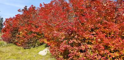 The fall colors were in full show - Rho Ridge trail