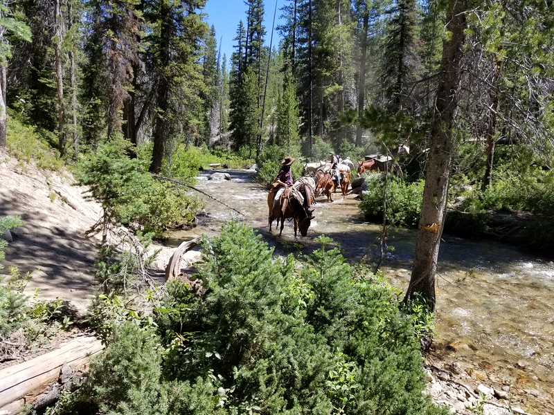 A pack train that was crossing the creek right after we did - 12 horses!