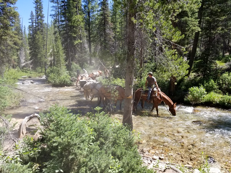A pack train that was crossing the creek right after we did