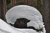 20170218_RMNP - Baker Gulch snowshoeing_014