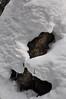 20170218_RMNP - Baker Gulch snowshoeing_015